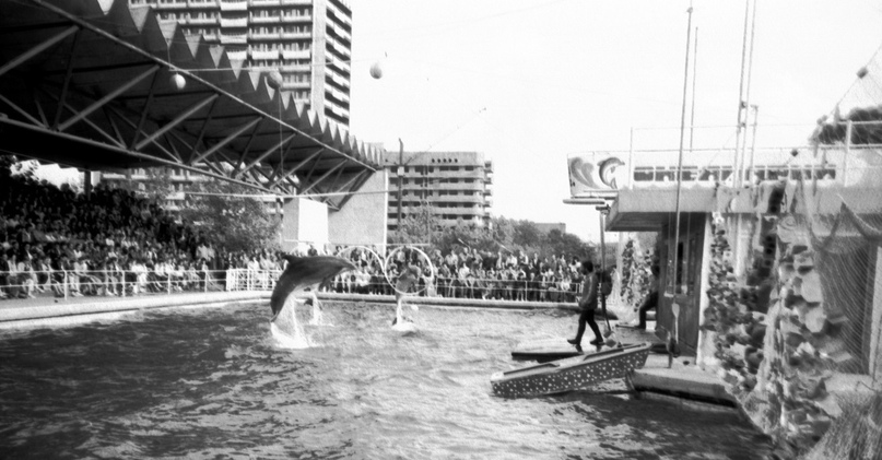 Батумский дельфинарий.
