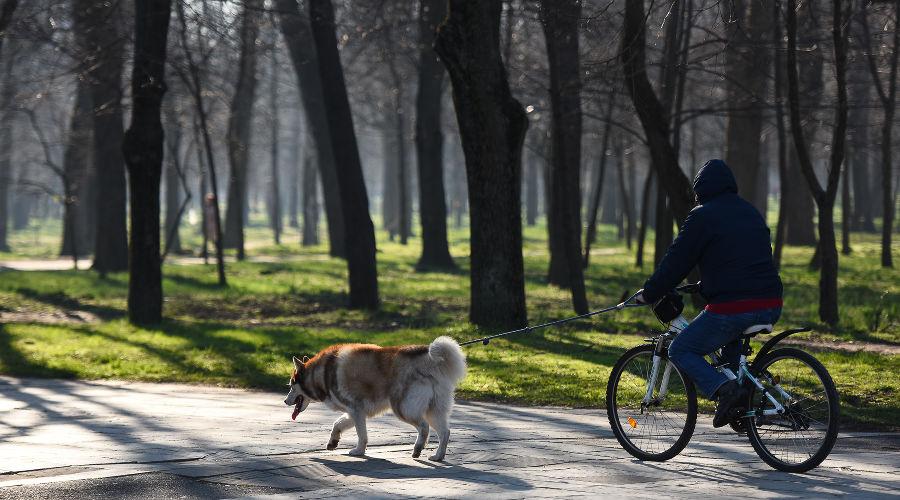 О чем говорит новый закон об ответственном обращении с животными. Разбор
