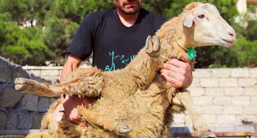 Бакинцы раскритиковали цены на жертвенный скот в Курбан-байрам
