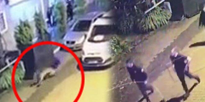 В турецком городе Ардвим полиция гонится за медведем (ВИДЕО)