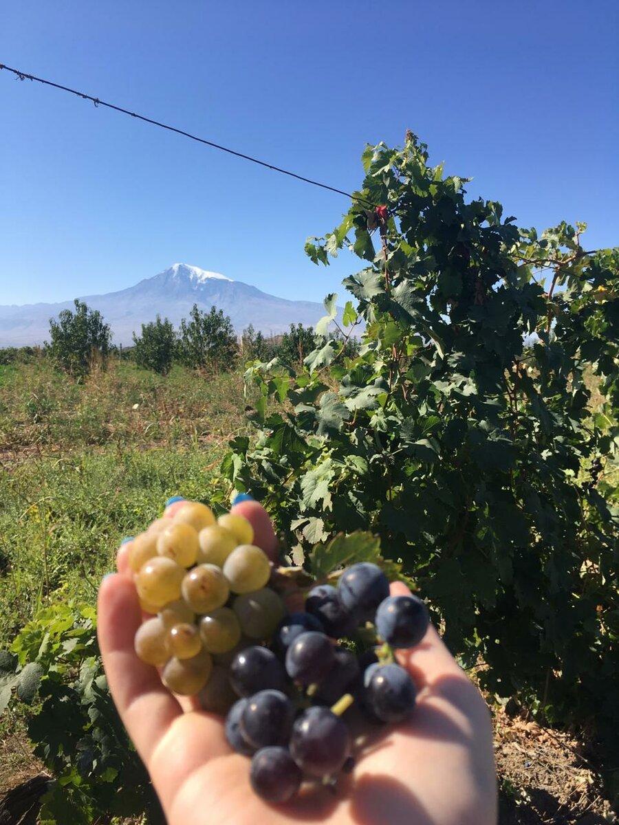 Армения. Едим арбузы на чужой бахче.