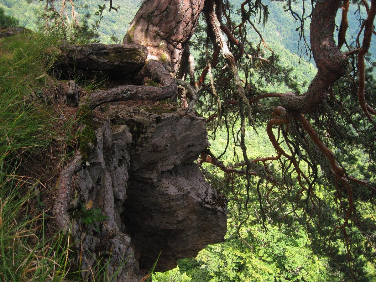 Сосновая поляна: любуемся панорамой горной Адыгеи