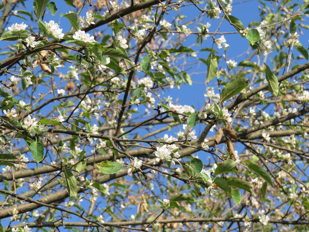 Два раза в год сады цветут: в октябре на юг вновь пришла весна