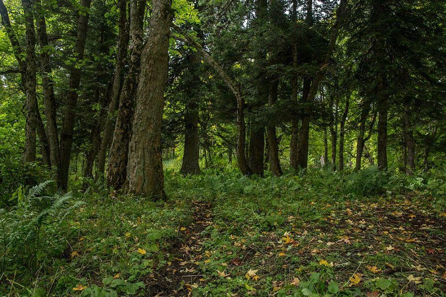За прошедший год в лесах Краснодарского края снесено более 60 незаконных построек