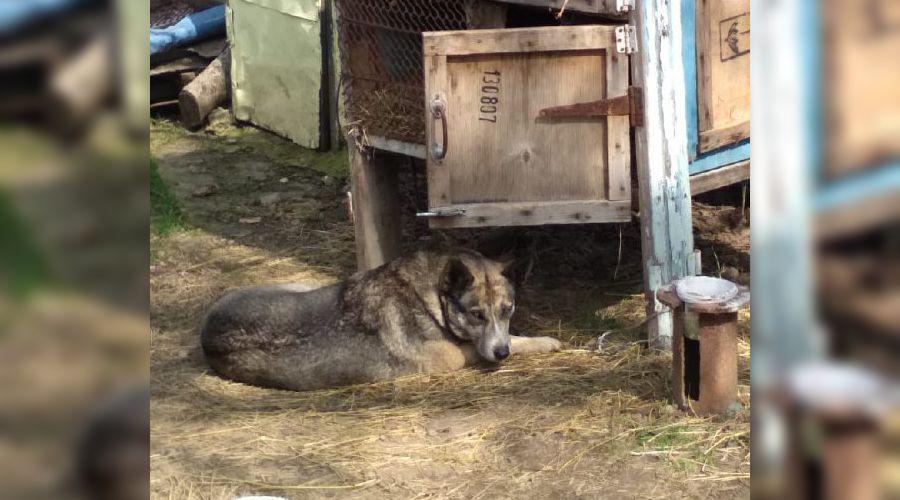 В Динском районе волонтеры вызволили собаку, которую мужчина держал в капкане